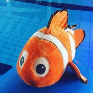 Vi har fundet Nemo Men han vil gerne hjem s hans ejer kan hente ham i svmmehallens reception fredericiaidrtscenter svmmehal findnemo nemo